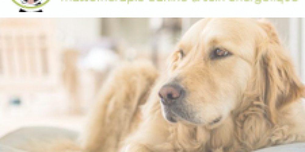 Bien-être canin